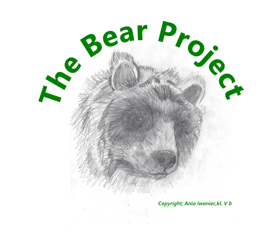 The Bear Project Exhibition