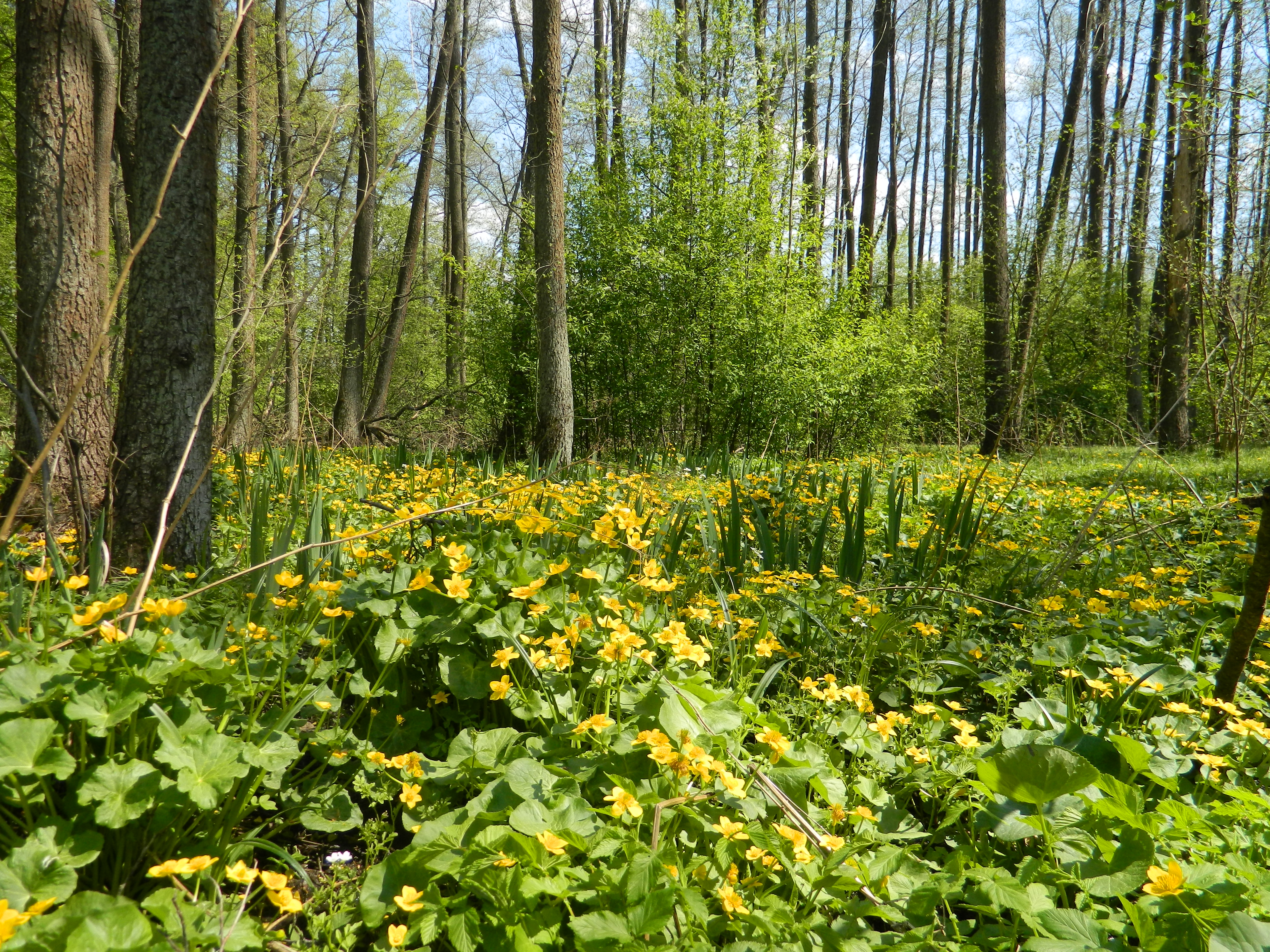 A spring forest.